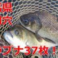 群馬県板倉町の近くにある砂利穴(ジャリ穴)でヘラブナ釣り!
